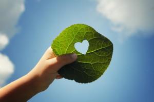green - Copyright Nicole Effinger - Fotolia.com